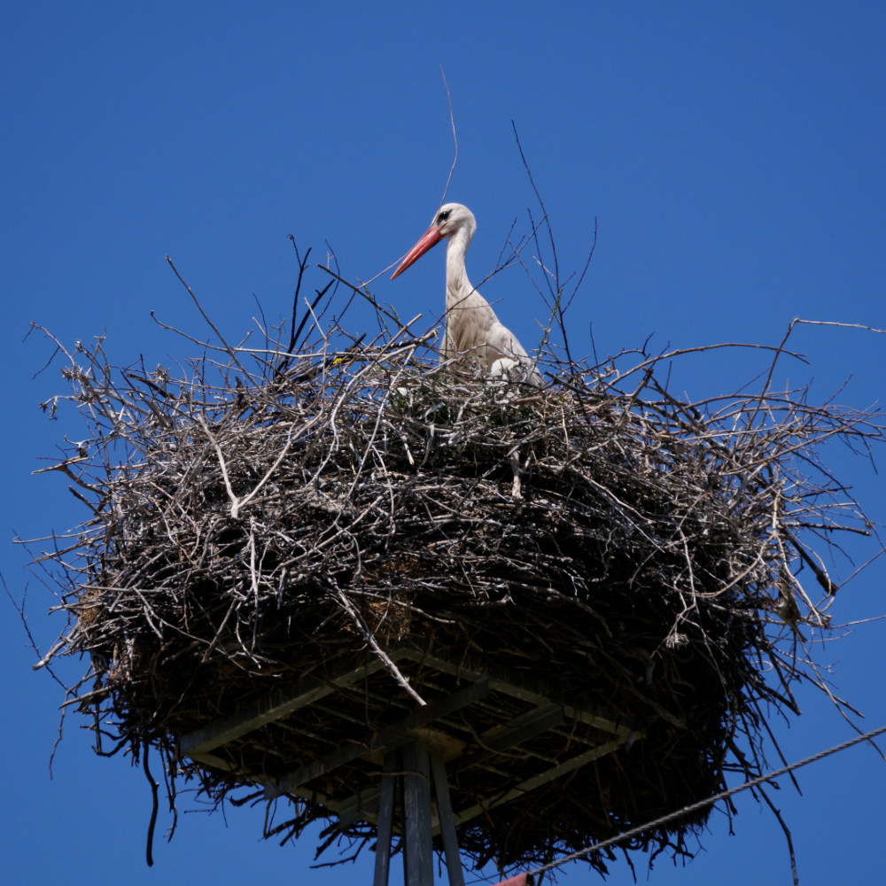 Nesting stork on an electricity pylon, along the road out of Cordoba