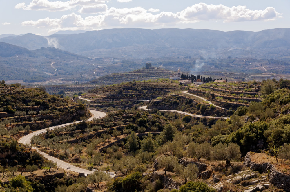 The road and the olive terraces